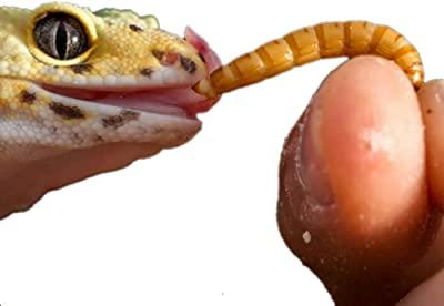 Predator Foods Bulk Live Mealworms