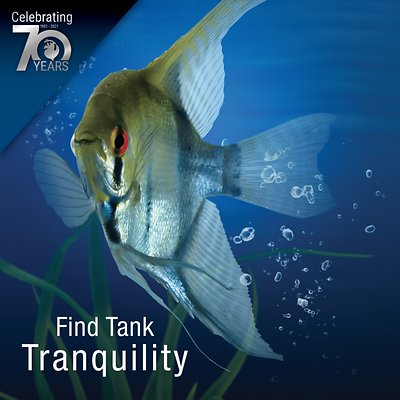 Tetra ReptoMin Floating Sticks Turtle & Amphibian Food