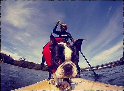EzyDog Doggy Flotation Device Life Jacket