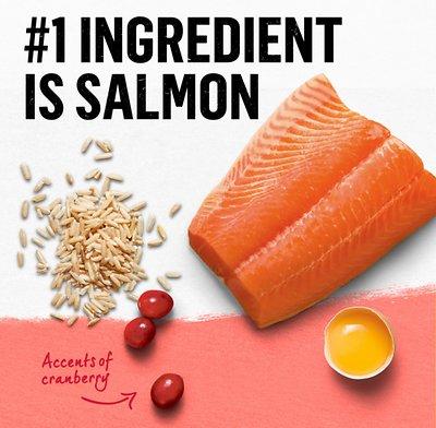 PURINA BEYOND  Simply Salmon & Whole Brown Rice Recipe Dry Cat Food