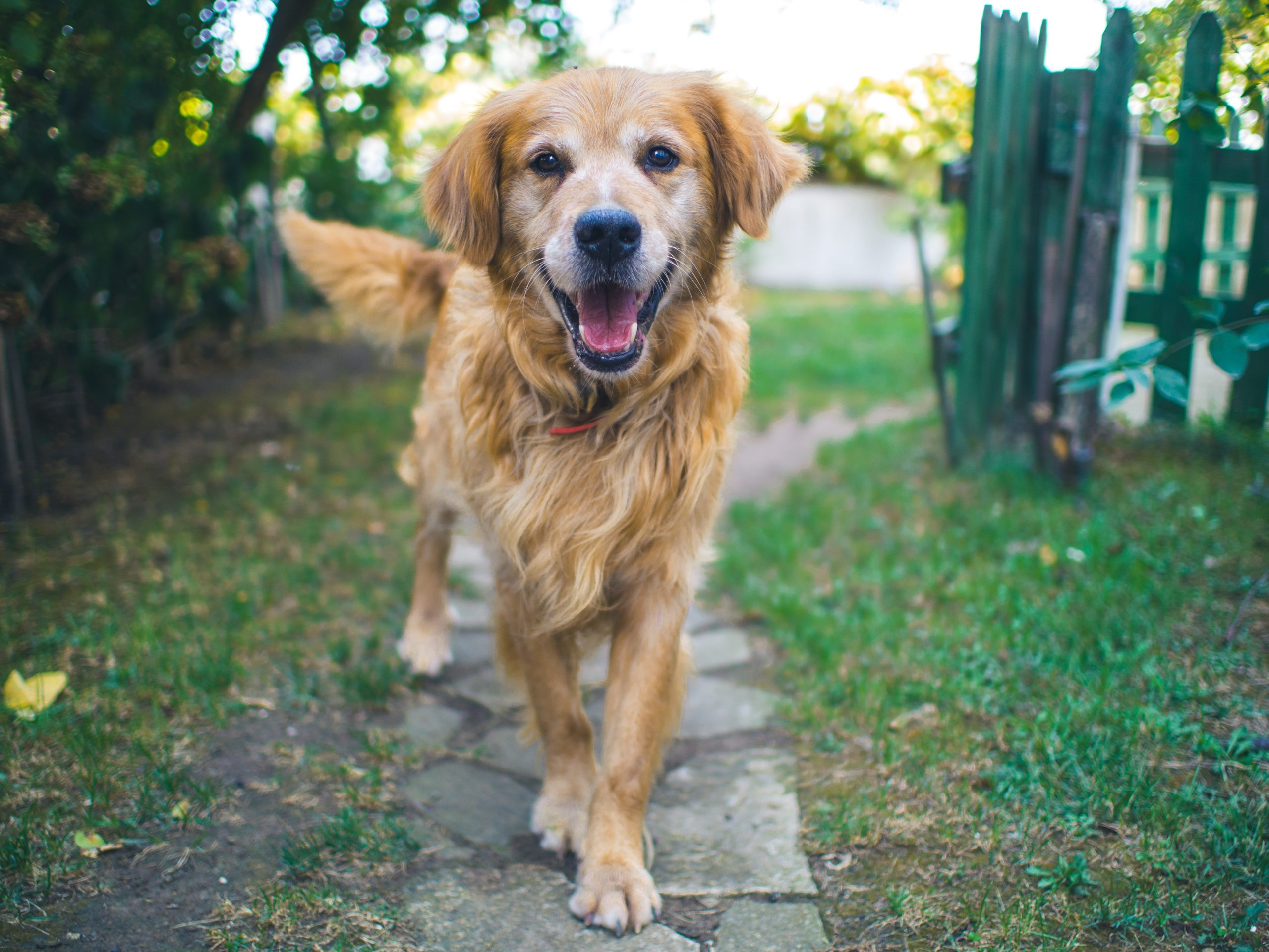 Dogs Wag Their Tail Differently To Convey Different Messages