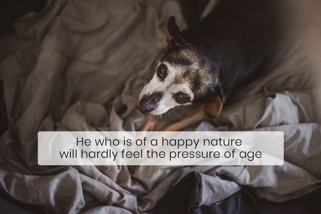 Your Senior Dog Needs More Protein, Not Less