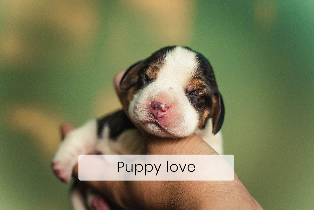 All Puppies Are Born Deaf and Blind