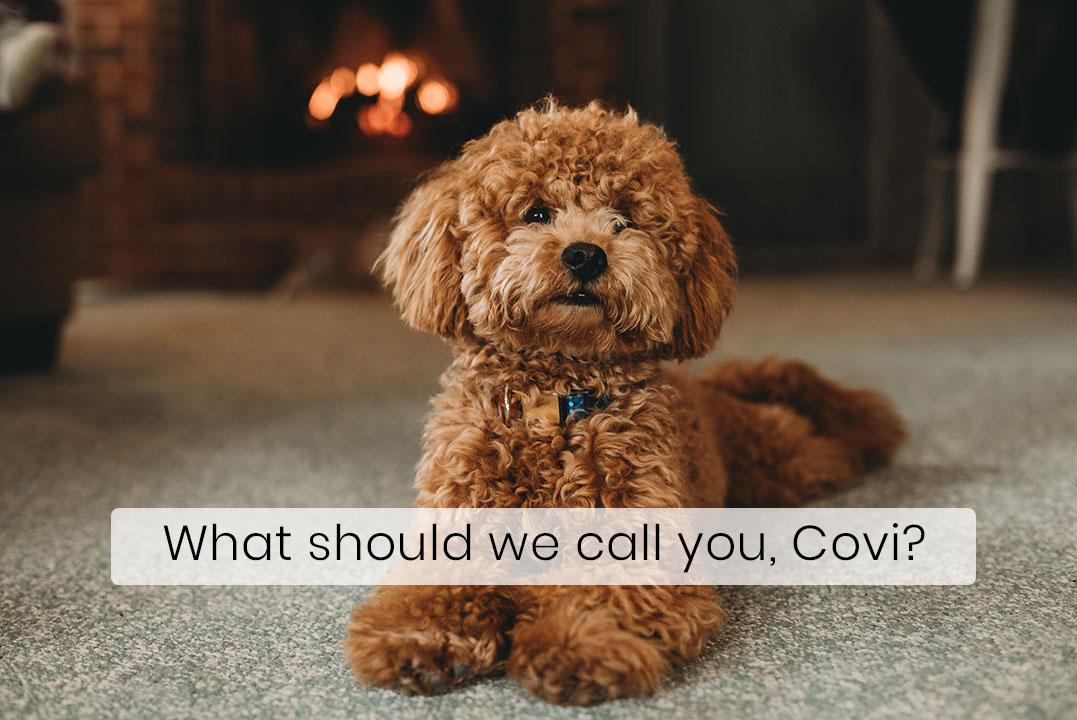 Corona Inspired Dog Names Becoming Popular