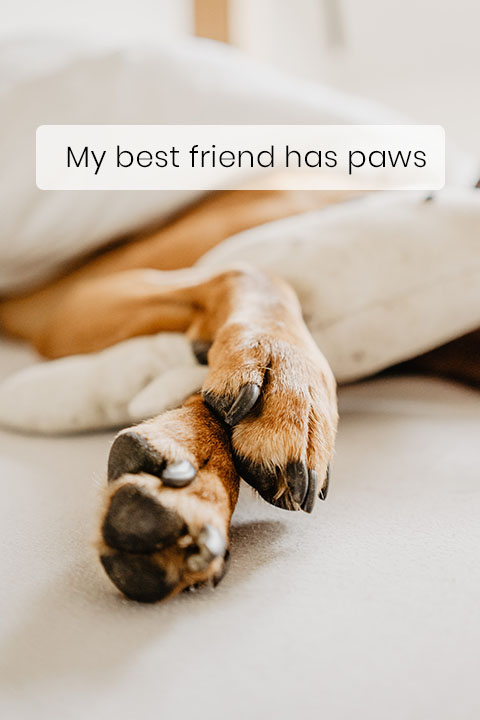Dogs Only Sweat Through Their Paws