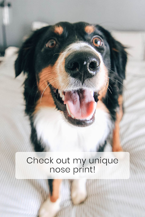 No Two Dog Noses Are the Same