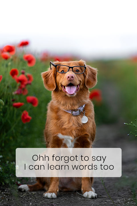 The Average Dog Knows 165 Words