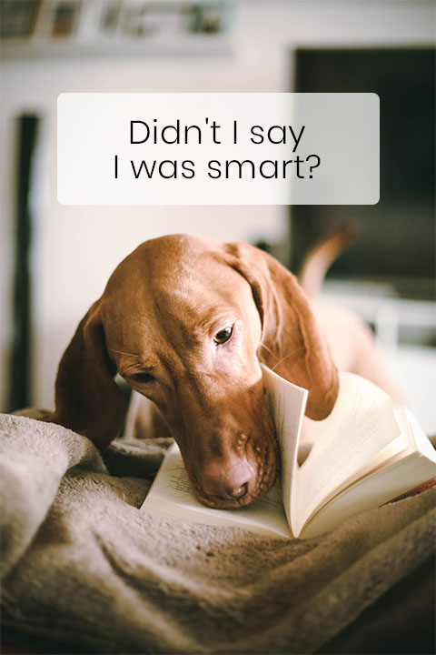 Dogs Can Tell Words Apart