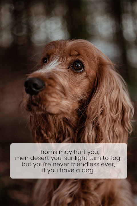 Dogs Can Read Your Emotions