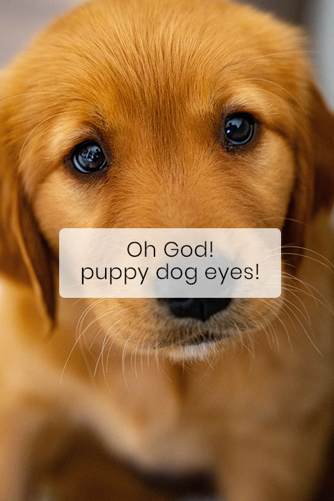 Your Dog's Puppy Face Is No Coincidence