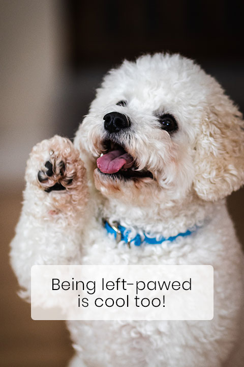 Your Dog Is either Right or Left-Pawed