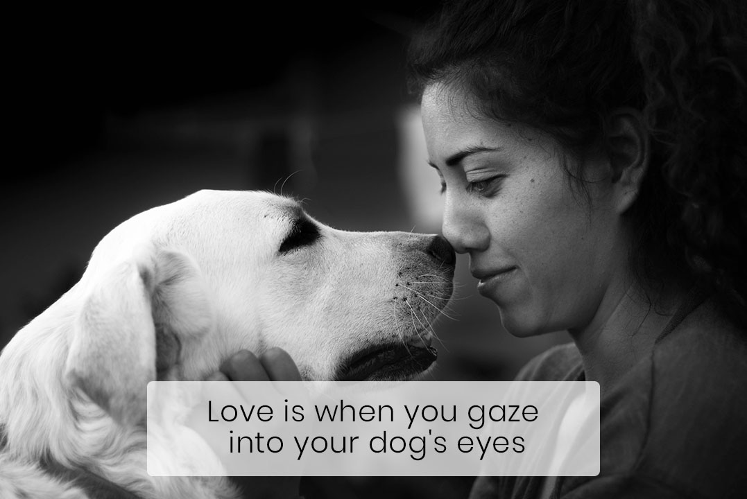 Gazing into Your Dog's Puppy Eyes Is Actually Good for Both of You