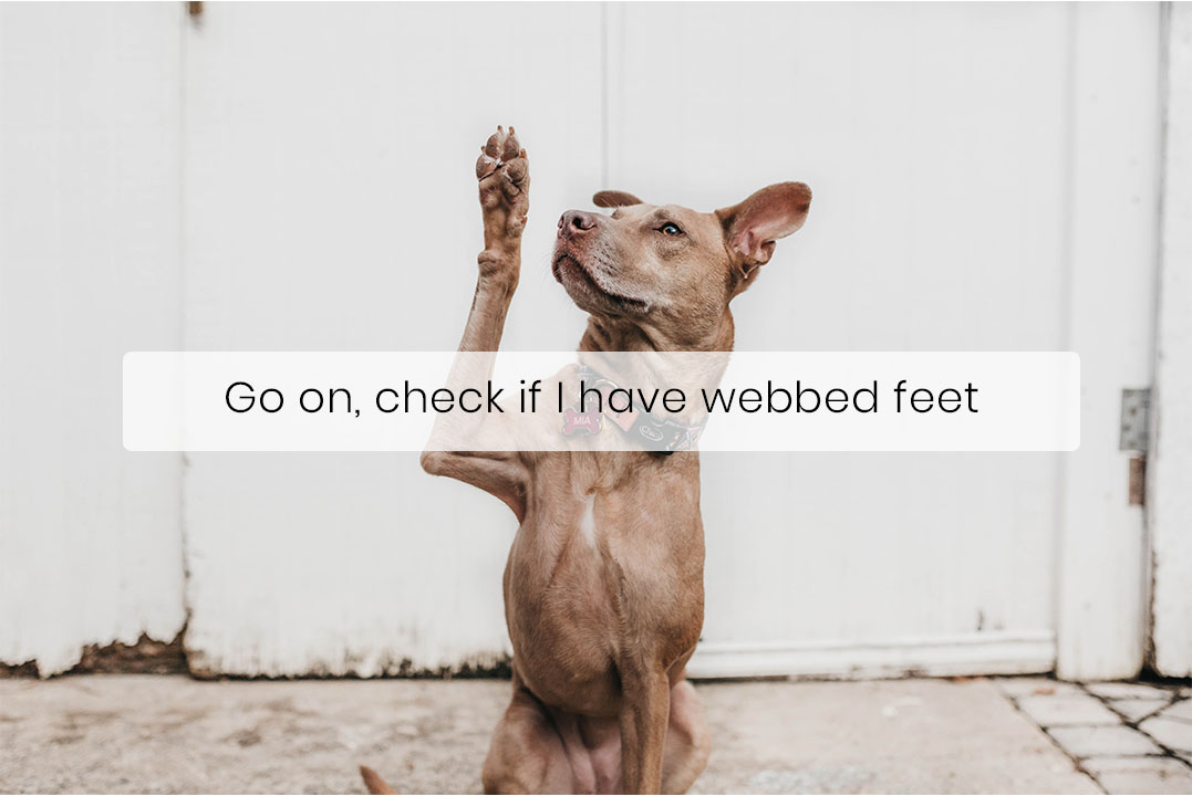 Some Dogs Have Webbed Feet