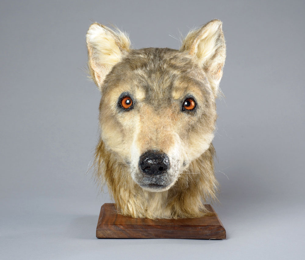 You Can Now See How Neolithic Dogs Looked Like Thanks To Facial Reconstruction